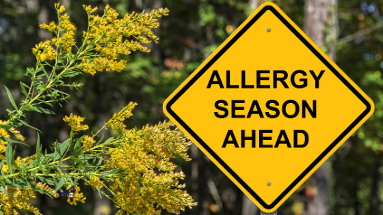 Surviving the Allergy Season